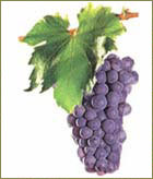 altri vitigni