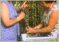 preparazione uve
